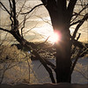 Sunrise at – 10 c (NaPix -- (Time out)) Tags: lake snow canada cold tree ice silhouette sunrise landscape frozen napix fencedfriday