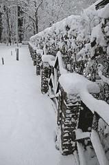 Fence and snow (=Mirjam=) Tags: winter white snow fence december sneeuw wonderland wit 2010 hek tuinhek bergennh parkmeerwijk d300s indesneeuw nikond300s bijhetbos langsdetuin