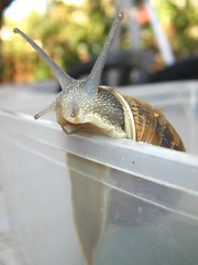 Reaching out to the World - ' '   (yoel_tw) Tags: snail gastropod    reachingouttotheworld