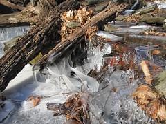 IMG_6124 (Ellen Bulger) Tags: winter ice nature woods connecticut woodbridge wepawaugriver