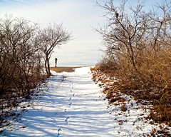 (Looking) For the Birds (Peter E. Lee) Tags: new trees winter england snow cold ma vanishingpoint path massachusetts newengland footprints brush birder newburyport 2010 birdwatcher parkerrivernationalwildliferefuge