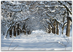 Avenue of the snowy Apple Trees (Habub3) Tags: park christmas travel schnee trees winter white holiday snow plant tree nature forest canon germany landscape deutschland licht vanishingpoint flora europa europe frost stuttgart walk urlaub natur meadow wiese powershot explore avenue landschaft wald frontpage weiss baum apfel vacanze reise 2010 allee spaziergang g12 interessting remstal interesstingnes explorewinnersoftheworld habub3