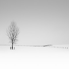 Snowed Trees (Michael Diblicek) Tags: trees blackandwhite white snow black france field fence square grey east fields format fenceline luxueillesbains vesoul easternfrance n57