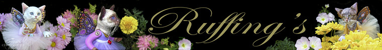 Ruffing's new Etsy shop, banner by Elizabeth Ruffing