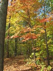 great place to start sauntering (birchloki) Tags: autumn trees light shadow ohio sky color tree fall nature forest shadows trails trail botany forests edon edonohio
