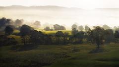 daybreak (Dennis_F) Tags: uk morning trees light mist lake tree fog landscape dawn licht nebel sheep district sony dslr daybreak a850