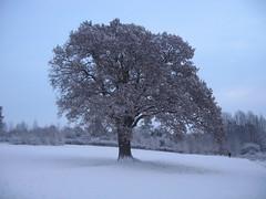 Snow December 2010 009