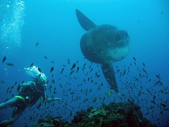 Bali diving Dive Concepts_071