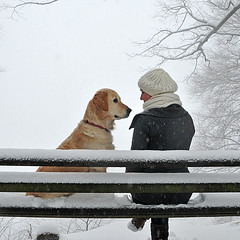 Two on a snowy bench ... (joergschickedanz) Tags: winter fab dog snow love goldenretriever bench couple dogandgirl absolutegoldenmasterpiece 20101224freiburg