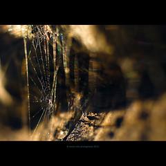 catching rainbows (stella-mia) Tags: macro net norway closeup 50mm spider rainbow dof bokeh pov web internet spiderweb cobweb spidersweb highlight nett spidersilk canon5dmkii catchingrainbow annakrømcke