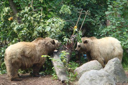Maxi und Schnut im Bärenzwinger im Köllnischen Park