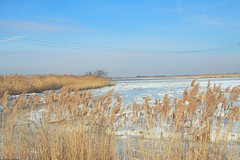 Across the Marsh (Jimbo in Jersey) Tags: winter snow cold bird ice water pine river frozen newjersey seagull gull cedar salem elsinboro