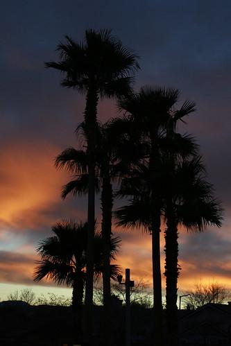1.16 - Palm Tree Sunset