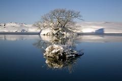 Great reflection I (Petur Bjarni) Tags: winter lake reflection iceland pond reflexions myvatn sland vetur tjrn mvatn speglun opposti platinumheartaward mirrorser superstarthebest bestcapturesaoi elitegalleryaoi happatjrn unluckypond