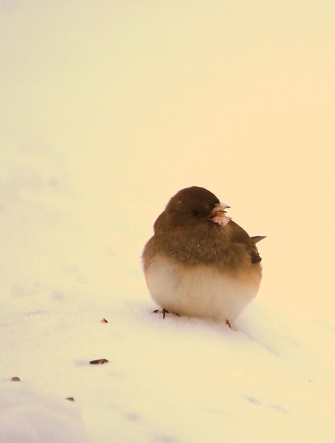 Winter birds 6