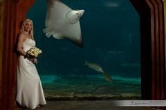 Atlantis Bride (Ben Jamieson Photography) Tags: wedding portrait aquarium bride ray stingray atlantis cloisters paradiseisland thedig oneonlyoceanclub ef1635mmf28liiusm