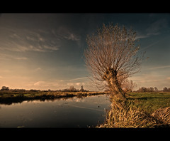 Willow (Focusje (tammostrijker.photodeck.com)) Tags: holland tree netherlands meadow boom trail willow filter polarizer weiland sloot wilg zuidholland knotwilg pollardwillow woerdenseverlaat oudhoornpad