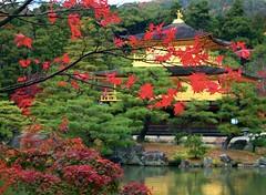 Kinkaku-ji in Autumn (love_child_kyoto) Tags: travel november autumn japan architecture japanesegarden maple kyoto autumnleaves    olympuspen   kinkakuji  worldheritage rokuonji  11  kitayama    mishimayukio   kyokochi    ashikagayoshimitsu      microfourthirds    kyokoike