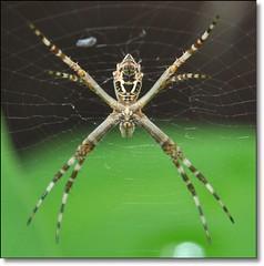 A aranha vive do que tece... (Marina Linhares) Tags: spider nikon web aranha teia d3000