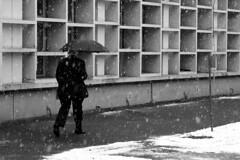 fiocchi di neve (.:grana:.) Tags: winter blackandwhite bw snow cold snowflakes cisco neve inverno freddo friz ombrello monza conferenza fiocchidineve nevicando ponc bianconereo