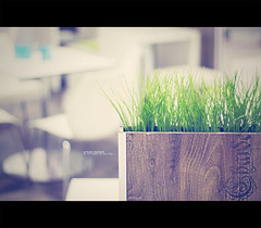 Urban nature (Maegondo) Tags: urban green nature grass canon vintage germany bayern deutschland bavaria 50mm dof bokeh creamy ingolstadt eos1000d