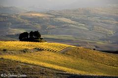 Val d'Orcia 69 (DeStefano Daniele (OFF-OFF-on)) Tags: italy canon italia tuscany montalcino pienza montepulciano valdorcia toscane italie cretesenesi coline asciano canon30d supershot collinetosca