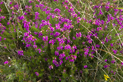 Heather (storvandre) Tags: travel ireland sky plants nature abbey landscape connemara irlanda reportage kylemore storvandre