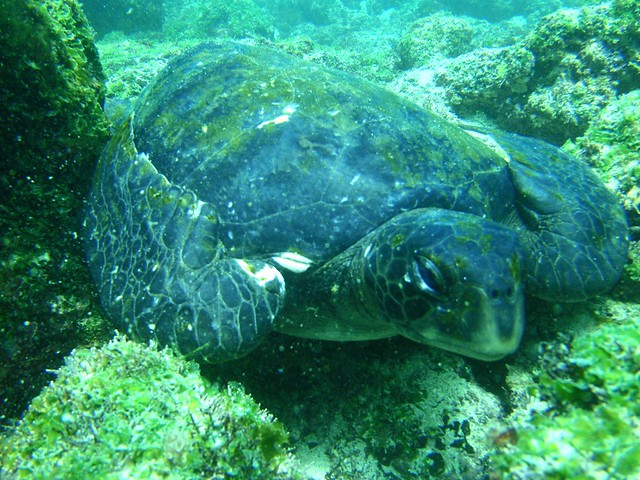 Sea Turtle Chilling