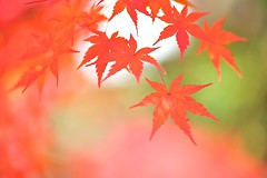 EIKANDO) (Jennifer ) Tags: autumn red green fall colors yellow japan temple kyoto     kaede      5
