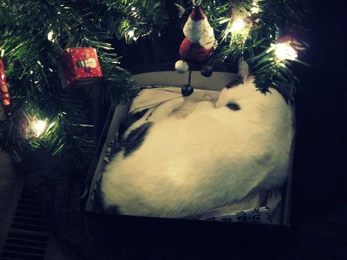 Its my cat in a box