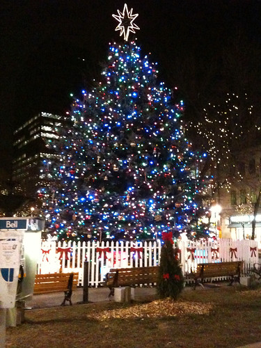 Gore Park Christmas Tree