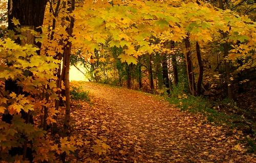 Autumn Dusk / Vir Raras
