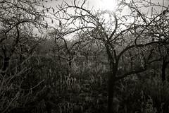 Hideaway (b&w) (Timoleon Vieta II) Tags: trees winter bw monochrome beautiful sunshine canon dark orchard explore wilderness excellence explored swedishmodel