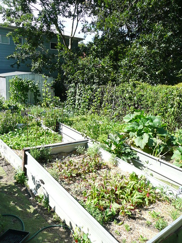 Sprout - garden