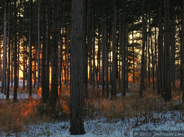 Morton Arboretum at Sunset II