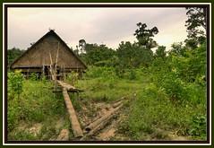 Uma (CANNIVALS) Tags: trekking indonesia sony selva uma explorador a700 mentawai siberut casatipica mentawaiisland islasmentawai blinkagain bestofblinkwinner