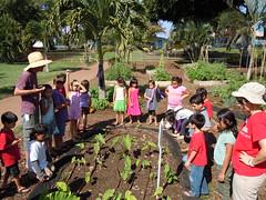 DSCN0413 (Grow Some Good) Tags: mauihawaii schoolgarden fall2010 kiheielementaryschool southmauisustainability southmauischoolgardensproject