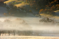 frost and fog (Marc Crumpler (Iliketh