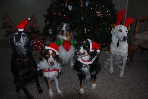 Xmas Dogs 2010 010