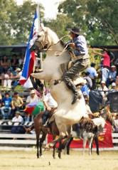 Mucha energia, amigos, en 2011 (Eduardo Amorim) Tags: horses horse southamerica caballo uruguay cheval caballos cavalos pferde cavalli cavallo cavalo gauchos pferd pampa hest hevonen chevaux gaucho  amricadosul hst uruguai gacho  amriquedusud  gachos  sudamrica suramrica amricadelsur  sdamerika jineteada   americadelsud gineteada tacuaremb  americameridionale eduardoamorim fiestadelapatriagaucha departamentodetacuaremb pampauruguaio pampauruguaya