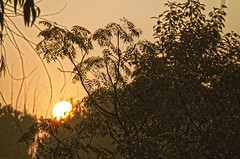 Sun Rise at Heritage [ দেওয়ান বাড়ীর সূয্যদদোয়-7 ] (HamimCHOWDHURY  [Active 01 Feb 2016 ]) Tags: life light shadow red portrait blackandwhite sun white black green nature sunrise canon eos twilight colorful faces blu sony surreal excellent eucalyptus dhaka vaio rgb hobigonj bangladesh dlsr 60d rubbergarden rubbercultivation 595036 framebangladesh rubberplan digombor dawanbari marufdeawan saguntig