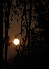 Sun Rise at Heritage [   -5 ] (HamimCHOWDHURY  [Active 01 Feb 2016 ]) Tags: life light shadow red portrait blackandwhite sun white black green nature sunrise canon eos twilight colorful faces blu sony surreal excellent eucalyptus dhaka vaio rgb hobigonj bangladesh dlsr 60d rubbergarden rubbercultivation 595036 framebangladesh rubberplan digombor dawanbari marufdeawan saguntig