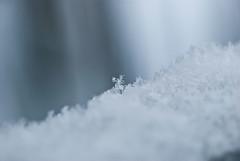 Infinitesimale (scarpace87) Tags: snowflake snow macro field dof bokeh explore neve campo 28 105 frontpage depth fiocco profondit