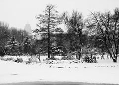 Amsterdam, Frankendael (Bart van Dijk (...)) Tags: park city trees winter urban snow ice netherlands amsterdam bomen sneeuw nederland streetphotography stad ijs stadsarchief rembrandttoren frankendael rembrandttower straatfotografie stadsarchiefamsterdam canoneos7d bartvandijk breeblebox cityarchivesamsterdam