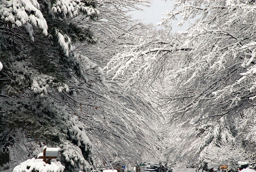 Greensboro Christmas Snow 2010