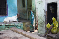 2 women and a goat (Dick Verton) Tags: travel india women asia goat streetlife varanasi streetshot smallsquare