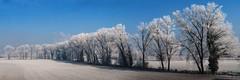 la sottile linea tra odio e amore (Stefano Schwetz) Tags: winter alberi frost national inverno geographic gelata circolofotograficopaullese nikonflickraward