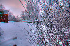 Anaglyph Backyard in Hoarfrost (fredtruck) Tags: house glasses 3d anaglyph hdr photomatix redcyan nikond90 tokinaaf1224mmf4