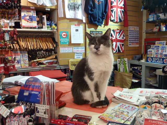 Thumb Cat in charge of a Gift Shop in London