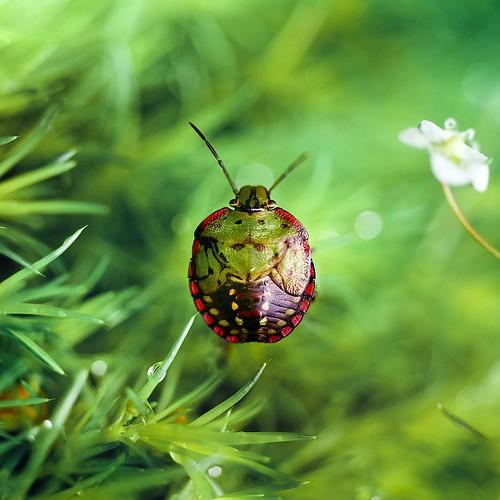Macro Bug : Cuba Gallery
